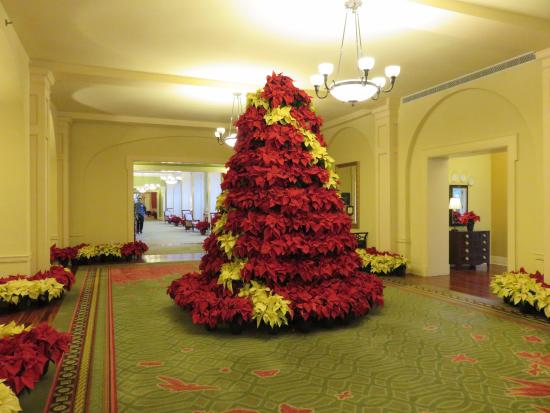 ฮอตสปริงส์, เวอร์จิเนีย: Poinsettia tree in a back vestibule