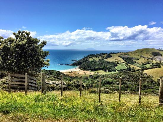 Waiheke Island, New Zealand: photo5.jpg