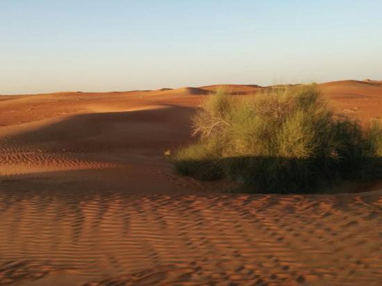 Dubai Desert Conservation Reserve: Safari nel deserto