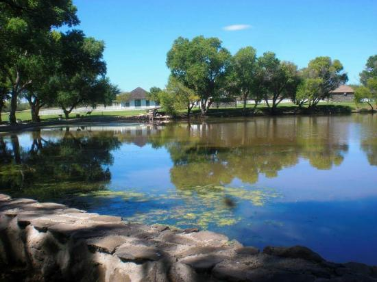 Douglas, AZ: Pond with tiny frogs and endangered fish