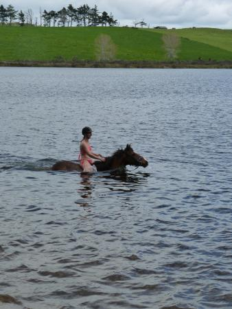 Wellsford, Νέα Ζηλανδία: Full day ride