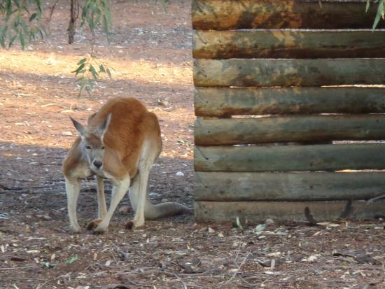 Waikerie, Australia: Across the road