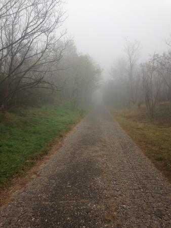 Vojvodina, เซอร์เบีย: Дорога через пустыню