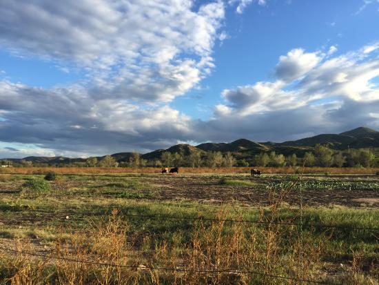 Hacienda Corona de Guevavi: Vast Desert