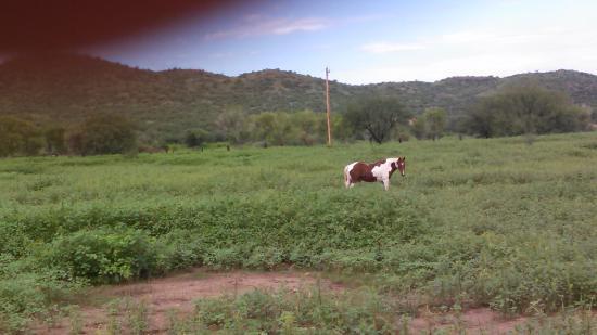 Nogales, AZ: Horses