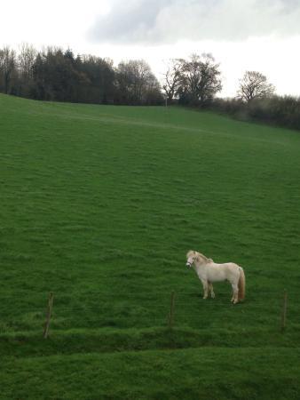 East Knoyle, UK: photo2.jpg