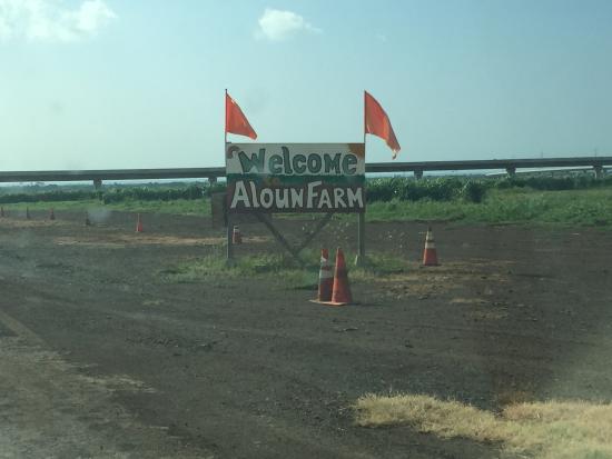 Aloun Farms Bild