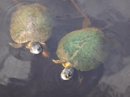 Governor Michael Gore Bird Sanctuary: Turtle power