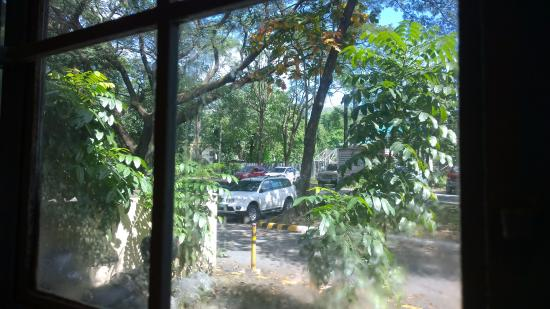 Chocolate Kiss Cafe: A view out of the window, to the greenery of UP Diliman