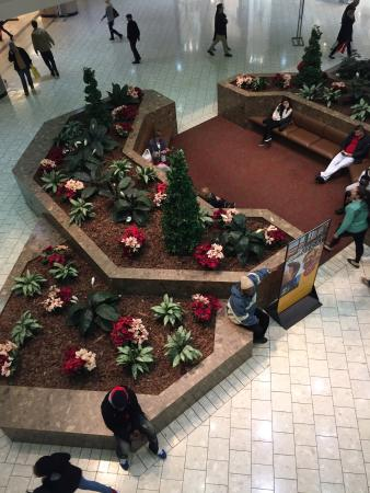 Stamford Town Center: Ugly fake plants, dirty carpeting, cracked and dirty tiles! DONT GO HERE!!!