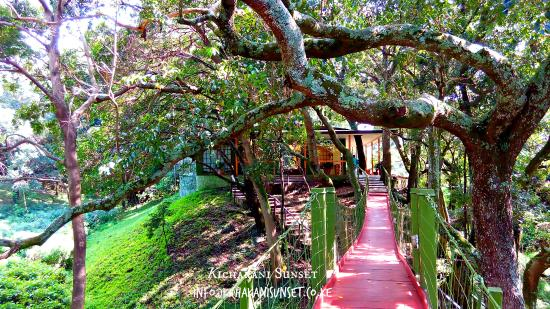 Sekenani Camp: great grounds