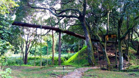 Sekenani Camp: bridge to rooms