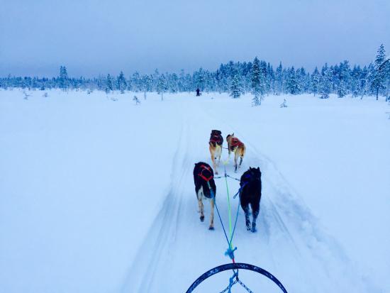 Husky Ranch Lapland