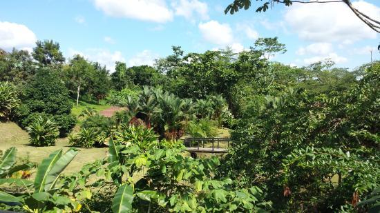 Landscape - Arenal Manoa Hotel Photo