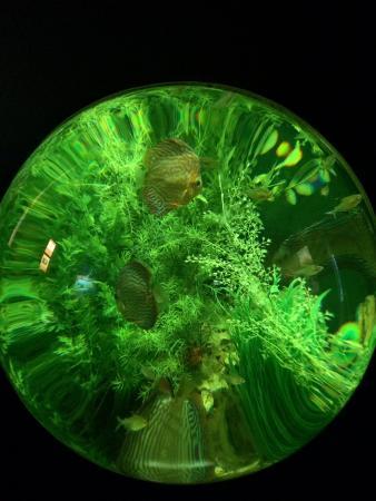 Lakes Aquarium: Round tank