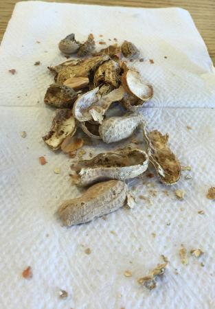 Five Guys: Appetizers. ( salted peanuts)