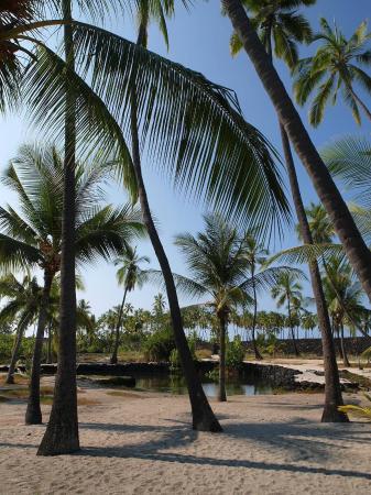 Honaunau, Hawaï : photo1.jpg