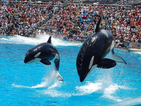 San Clemente, Californien: Sea World