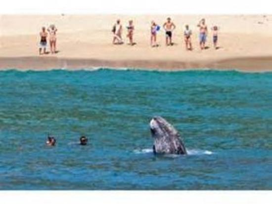 San Clemente, Californien: Whale Watching