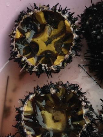 May Restaurant: sea urchin