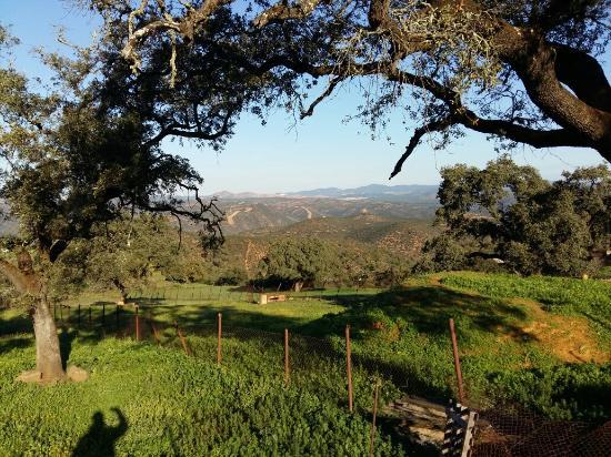 Alojamientos Rurales Berrocal: Entorno