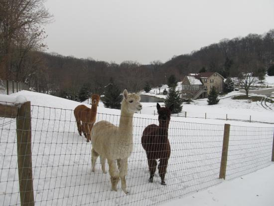 Columbia, PA: The boys in pasture