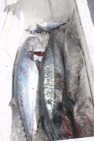 Bolo 6 picture of bolo sport fishing charters pompano for Pompano beach fishing charters