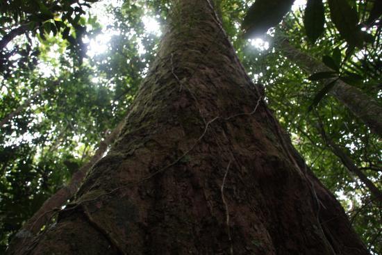 Grand Terre, Ny-Caledonia: Parc de la Rivière Bleue