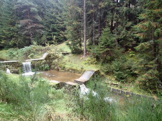 Park Kosutka: Príroda