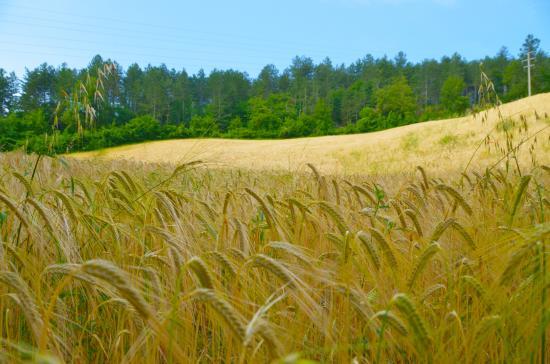 La Legnaia Picture Of Agriturismo Pianconvento Bagno Di