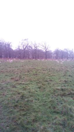 Richmond Park: The deer cattle