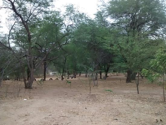 Carnauba dos Dantas, RN: Horto florestal municipal. 25.12.2015
