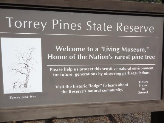 Torrey Pines State Natural Reserve Photo
