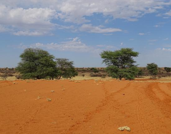 Gochas, Namibia: the Kalahari desert