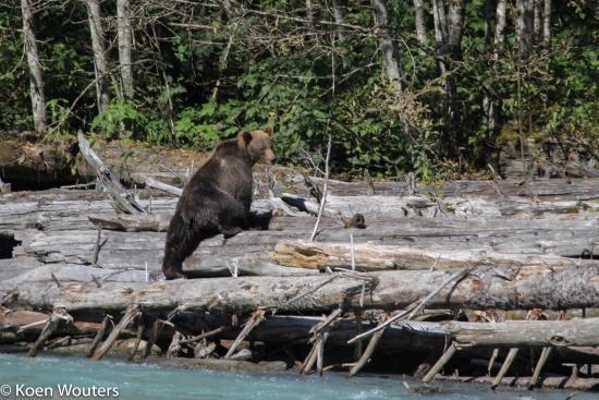 Campbell River, Καναδάς: Bute Inlet