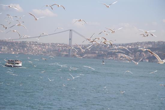 Istanbul Modern: テラスからの景色