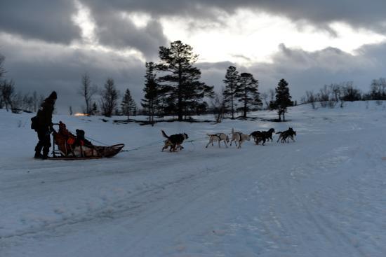 One Day Dog Sledding In Norway