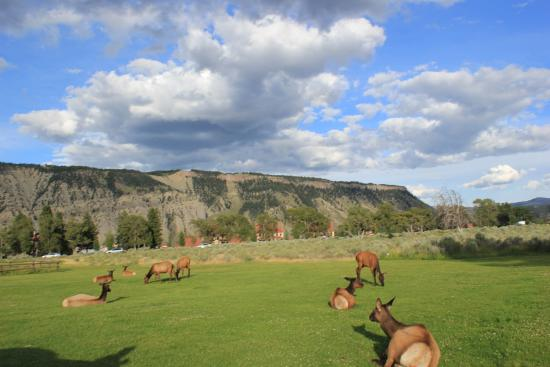mammoth hot springs hotel cabins picture of mammoth hot springs rh tripadvisor co uk