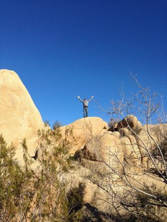 Jumbo Rocks Campground: photo2.jpg