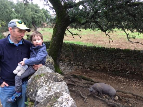 Alajar, Spania: Local wildlife whilst on a walk