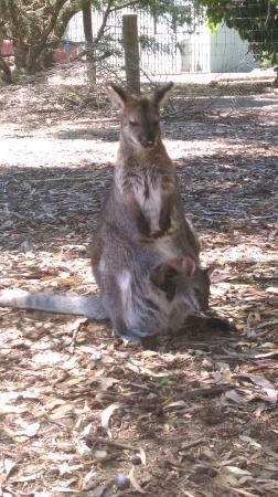 Parndana, Australia: IMAG0866_large.jpg