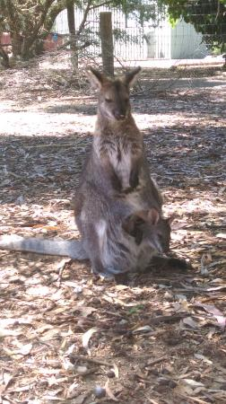 Parndana Wildlife Park: IMAG0866_large.jpg