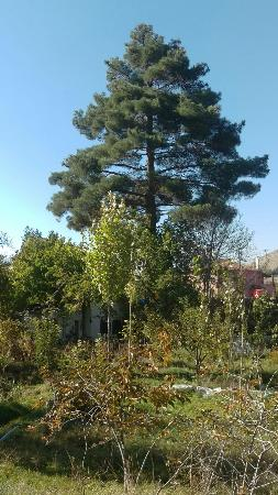 Nigde, Turkey: Kayaardi Baglari
