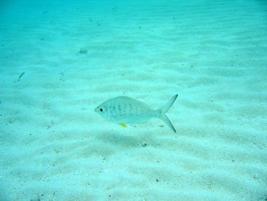 The Phoenix Resort: Snorkeling Friends