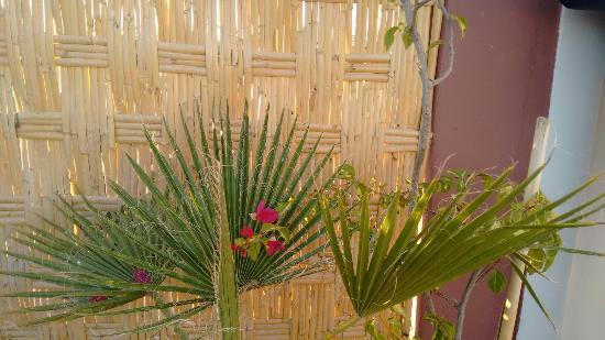 Riad Kechmara: IMG_20151223_175227387_large.jpg