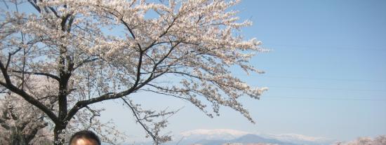 Shibata-machi, Japón: きれいな桜と雪