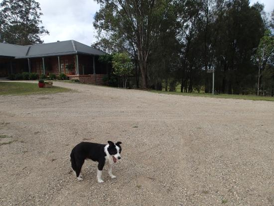 Hunter Valley Bed & Breakfast: little friend