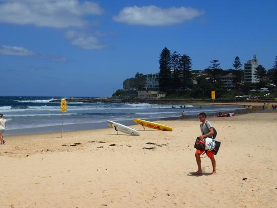 Manly Surf Guide: OI000955_large.jpg