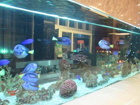 S31 Sukhumvit Hotel: บริเวณ ล็อบบี้ มีตู้ปลาทะเล เพิ่มความโดดเด่น ให้ จุดนี้ และร่มรื่น สบายตาครับ