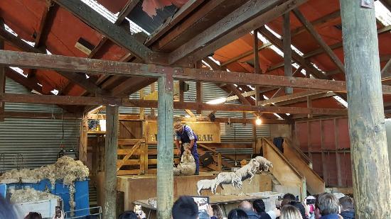 ควีนส์ทาวน์, นิวซีแลนด์: 20151224_205651_large.jpg